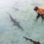 Snorkling bareng hiu